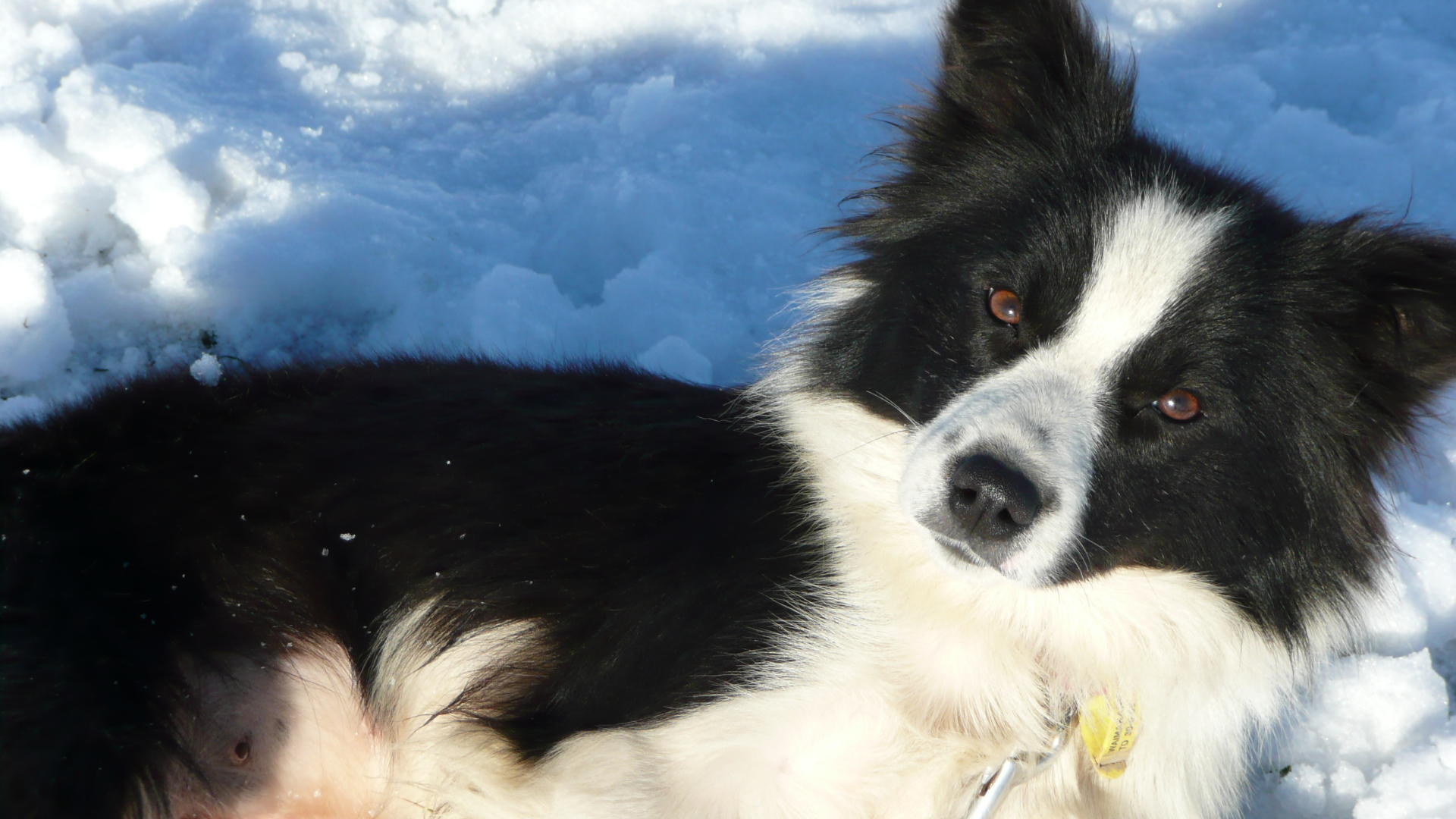 One of four Border Collies - Eyreview Retreat