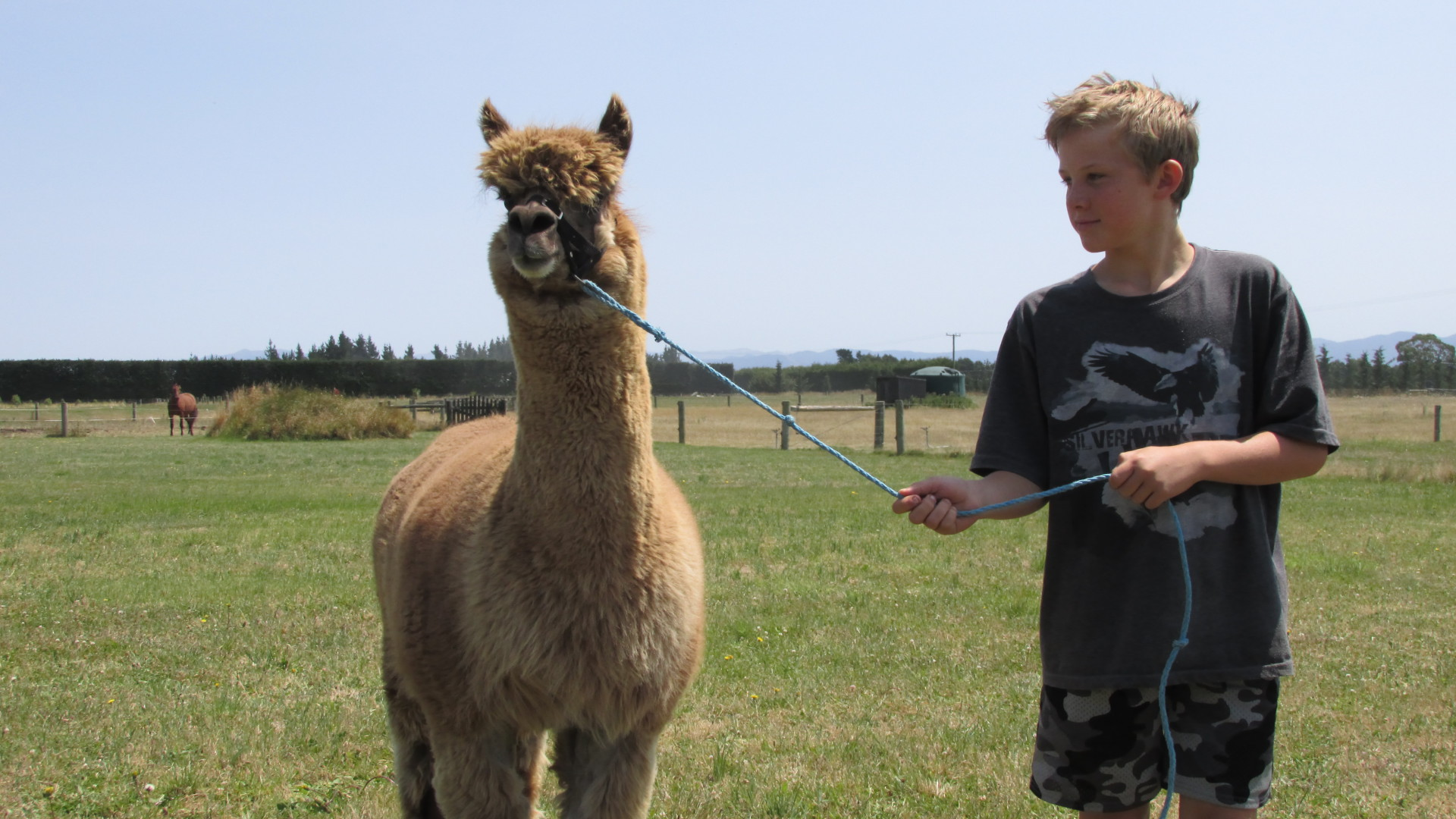 Lead an Alpaca - Eyreview Retreat